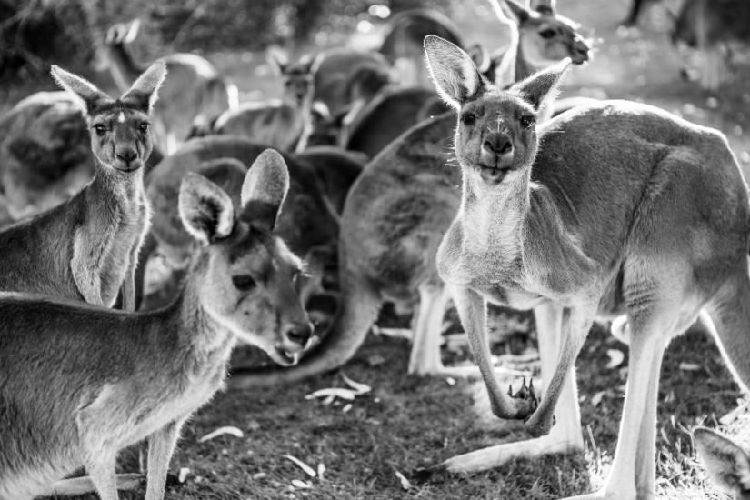 Photo Voyages : Voyage - Australie #46